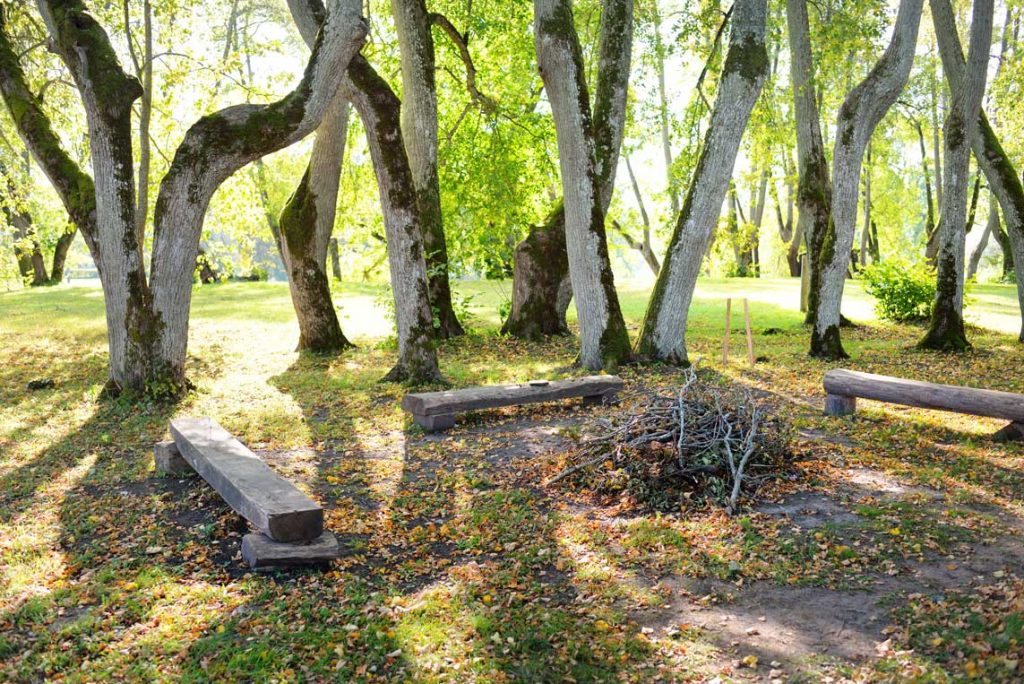 Green Lawn With A Campfire And Wooden Benches Under The Deciduous Trees